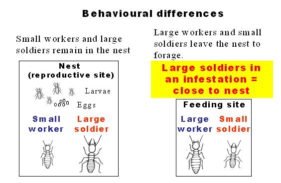 Termite Behavioural Differences