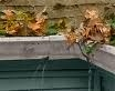 Clogged Gutter Picture