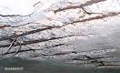 Concrete Cancer 2 Picture