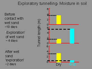 Exploratory Tunnelling Soil Moisture Graphic