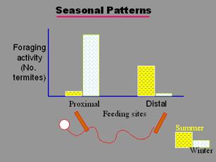 Seasonal Patterns Graphic