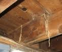 Termites 4 Picture
