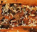 Termites Picture