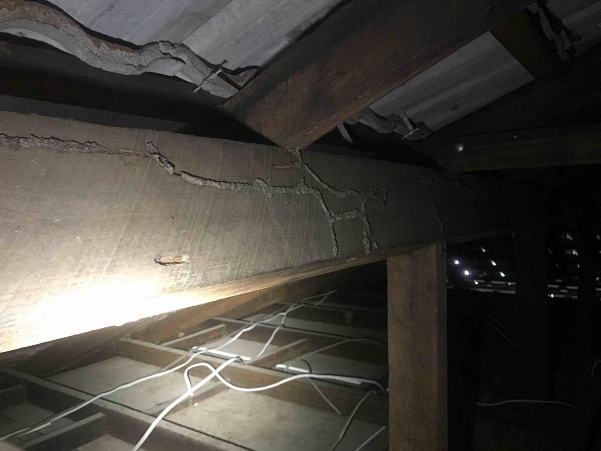 Termite Shelter Tubes In Roof Void