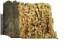 Borer Damage Image 1