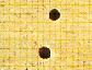 Borer Damage Image 2