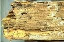 Termite Damage 2 Picture