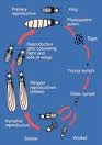 Termite Life Cycle Picture