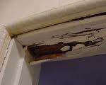 Termite Mudding 4 Picture